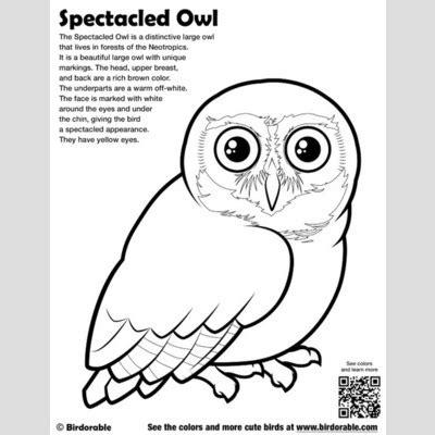 screech owl coloring page screech owl coloring pages