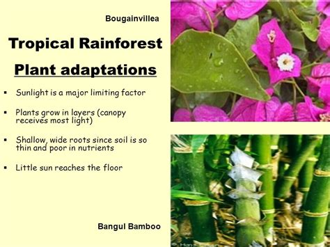what plants grow in a tropical rainforest world biomes ppt