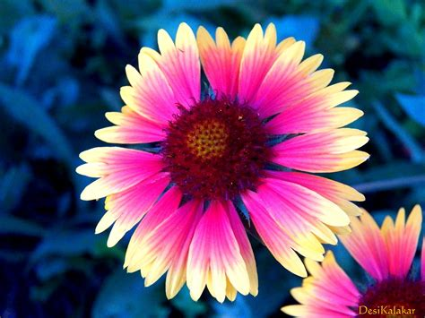 pretty plant desikalakar pretty flowers