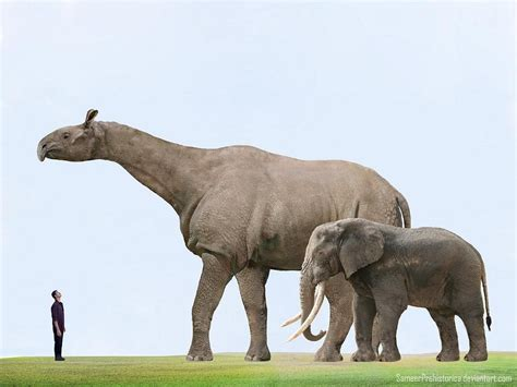 Animal Land 12 the largest prehistoric land mammal compared to the
