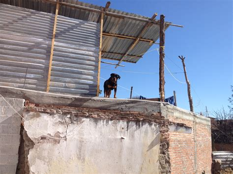 dog on a roof the roof dogs of mexico thetwigster