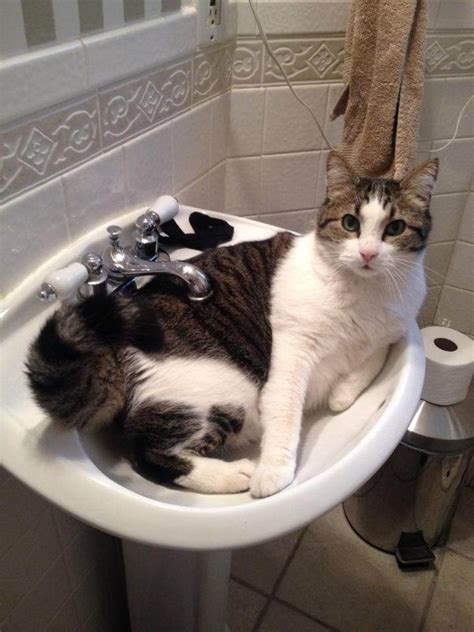 8 Reasons Why Cats Are Like Children by Why Do Some Like Cats More Than Dogs Updated Quora