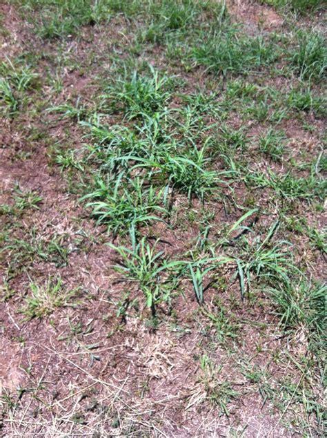 how to grow grass in backyard want a fresh new backyard flowers landscaping grow