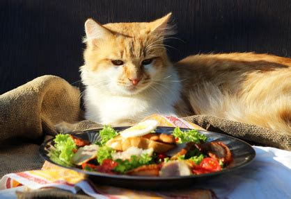 alimentazione gatto cucciolo l alimentazione gatto cucciolo e adulto sterilizzato