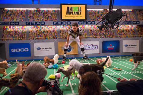 puppy bowl referee the of puppy bowl puppy bowl 2014 espn