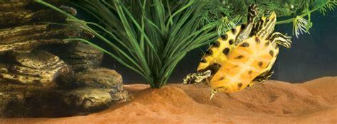 exo terra riverbed sand aquatic terrarium substrate