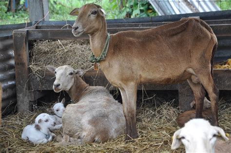 imagenes animales dela granja en peligro de extinci 243 n 17 de animales de granja en el
