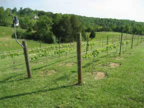 Wine Trellis Firstfruits Vineyard Fast Growth Slow Trellis
