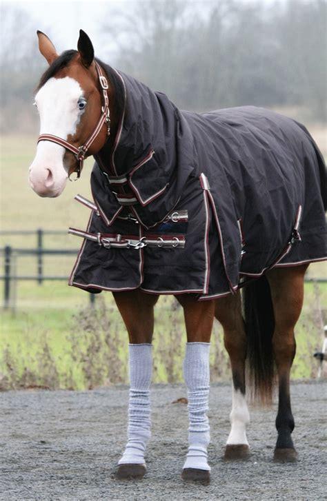 whinny warmers socks  horses gallery lightbox slideshow