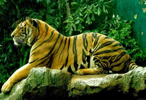 best hd downloader desktop best tiger wallpapers hd