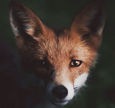 Interior Design Topics young photographer creates a bond with wild animals to get