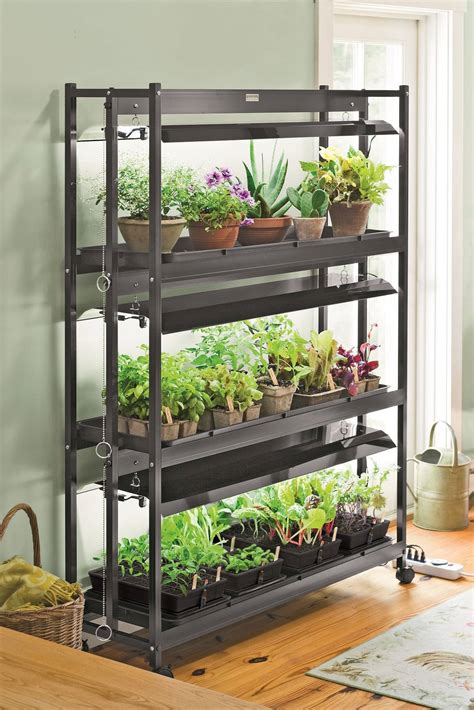 best lights for indoor growing successfully transition houseplants indoors for winter