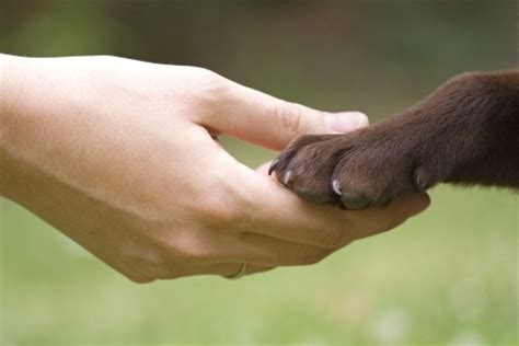 chemotherapy for dogs cost canine lymphoma chemotherapy wisconsin protocol canine lymphoma