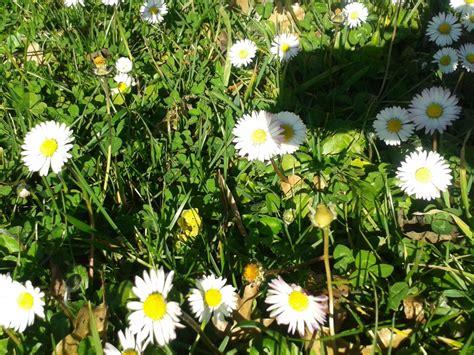 fiori febbraio fiori febbraio 3222 msyte idee e foto di