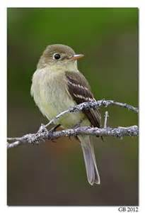 Bird Feeders Raleigh Backyard Birding Nc Piedmont On 53 Pins