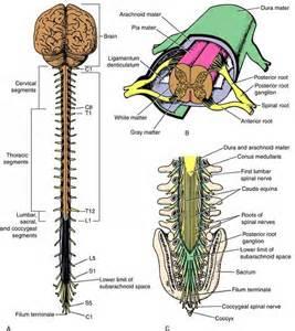 ovid clinical neuroanatomy universities education of