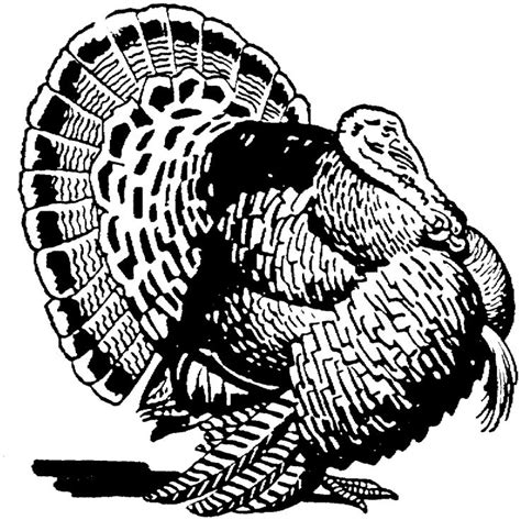 coloring pages for adults turkey turkey coloring pages for adults free turkey coloring