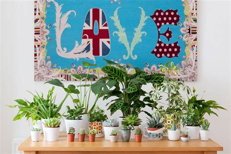 l for winter depression 11 houseplants ideas that outsmart winter depression