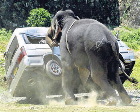 Animal Planet World S Most Dangerous Animals welcome to animal planet 09 10 most dangerous animals in