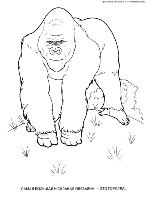 coloring page of wild animals wild animals coloring pages 9 wild animals kids