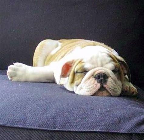 nap time dog humor