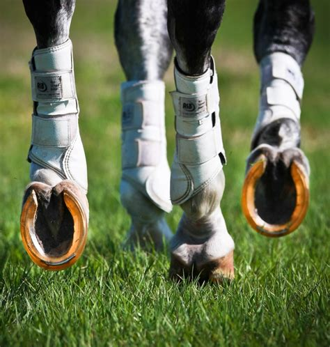 shoes for horses non metal horseshoes boots product roundup 2014 2014