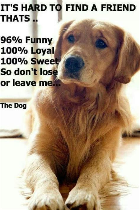 subaru commercial with golden retrievers dogs are loyal don t lose them golden retriever dogs