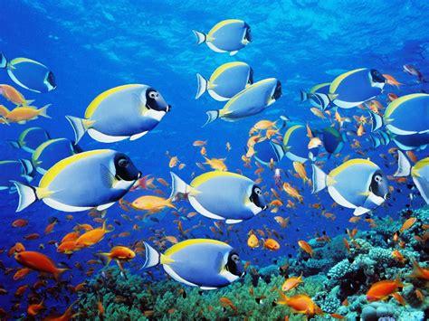 fish seaanimals aneka ikan laut oceanworld underwater fish fishes tropical sea reef wallpaper