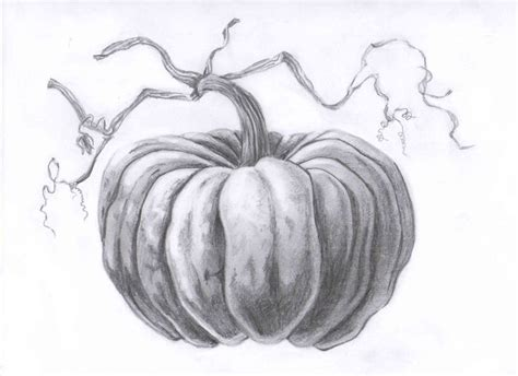pumpkin sketches 25 best ideas about pumpkin drawing on fall
