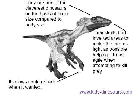 deinonychus facts  kids