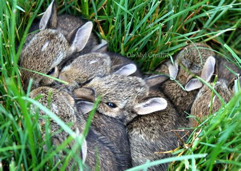 what to do with baby bunnies in backyard photo friday 3 baby bunnies oh my creative
