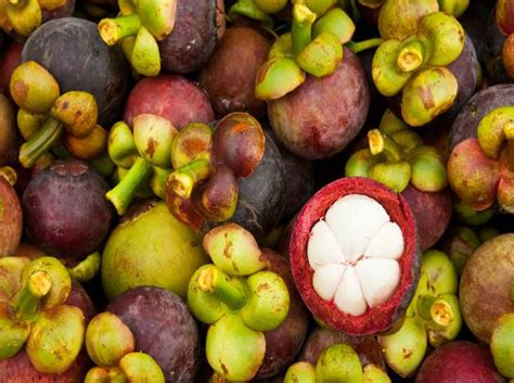 1 fruit in the world fruits in the world triphobo