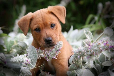 dog  world lovely   dog