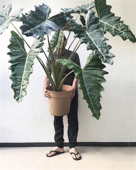 plants design   instagram im  cm nuf