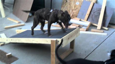 treadmill for dogs treadmill