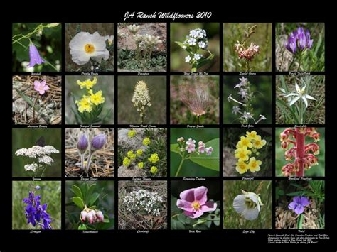 Garden Flowers Identification 1000 Images About High Country Activities On Lakes National Forest And Rocky Mountains