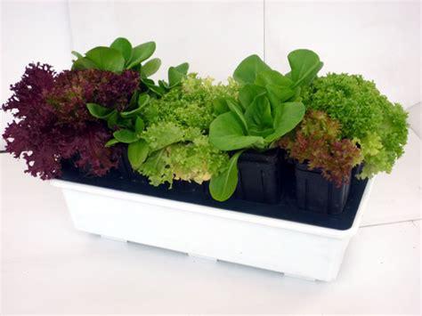 orto sul terrazzo di casa come creare un orto sul balcone di casa mondofamiglia