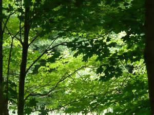 Tree Canopy Tree Canopy Photograph By Angela Hansen