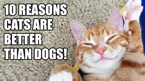 why dogs are better than cats why cats are better than dogs facts images
