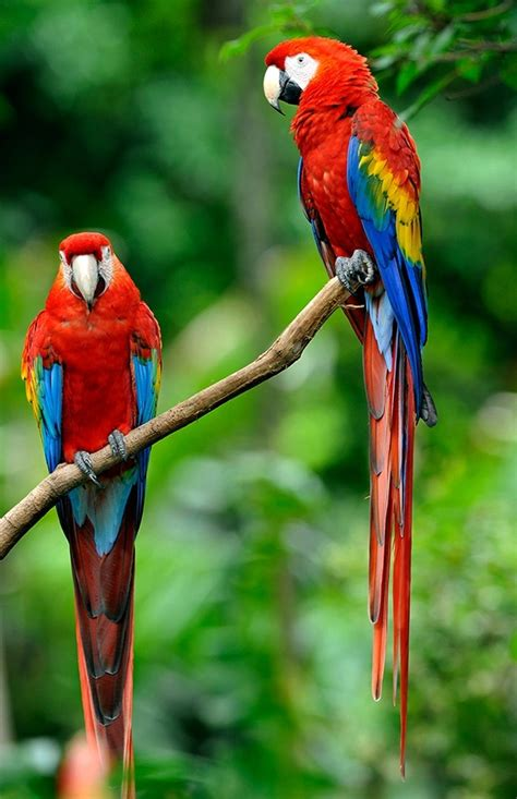 colorful bird pictures what are some of the most colorful birds quora