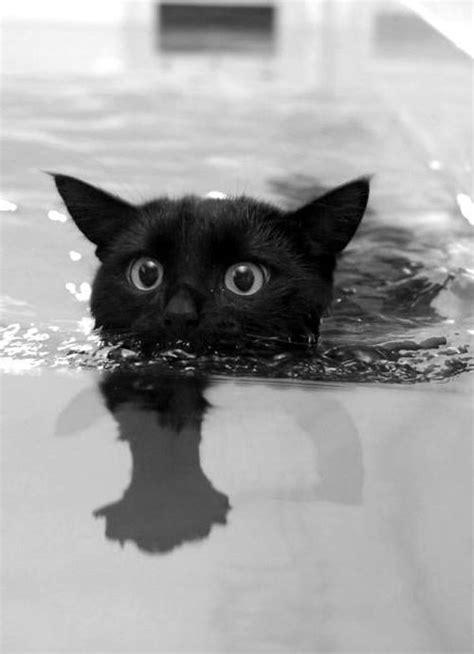 cat swimming in bathtub cat animals black and white gato gothic black cat dark art