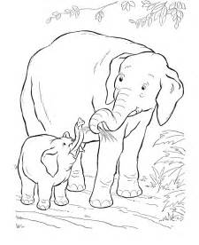 wild animals coloring pages coloring home