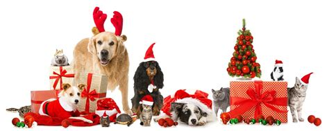 top pet gifts top 10 gifts for your pets movie tv tech geeks news