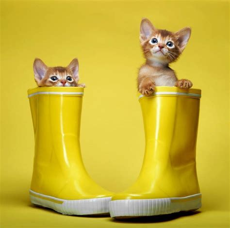 clean your house how to clean your house without harming your cats