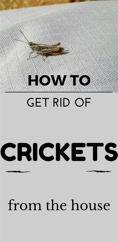 how to get rid of crickets from the house