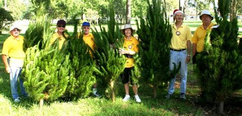lions christmas trees coming to winmalee blue mountains