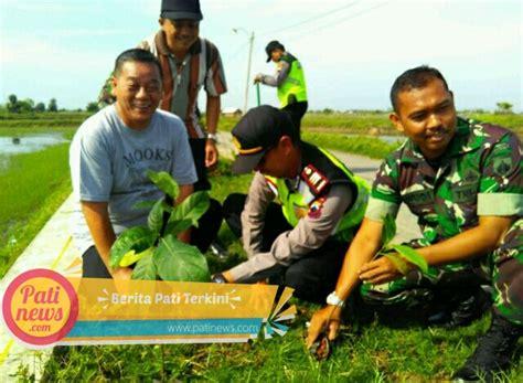 Bibit Sengon Di Pati hijaukan desa warga doropayung juwana tanam 600 bibit pohon