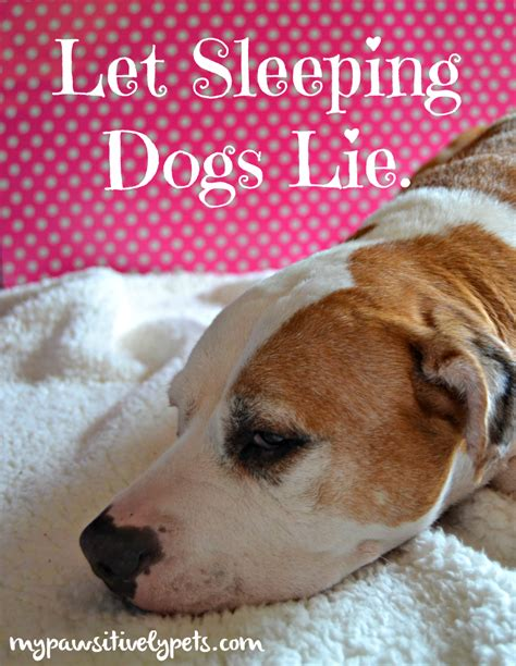 let sleeping dogs lie let sleeping dogs lie pawsitively pets