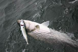 Cape Cod Canal Fishing Spots - modal title