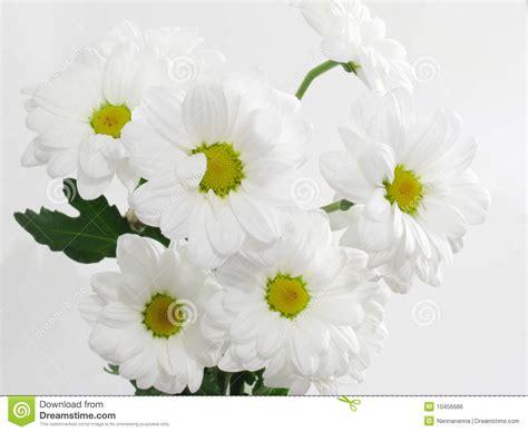 imagenes de flores blancas hermosas flores blancas hermosas imagen de archivo libre de